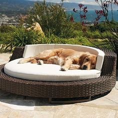 PLB-2040 DOG LOUNGE BED
